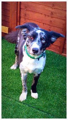 Handsome Hounds  Professional Dog Grooming Studio  Day Care 258 Milton Road  Weston-Super-Mare  BS22 8EN 01934 613806  www.handsomehoundsweston.co.uk