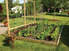 http://bloombety.com/wp-content/uploads/2013/10/Box-Vegetable-Garden-Ideas.jpg