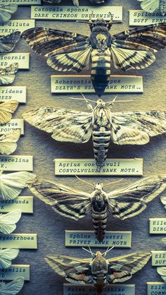 Insects: The taste of Petrol and Porcelain | Interior design, Vintage Sets and Unique Pieces www.petrolandporcelain.com Brighton Booth Museum
