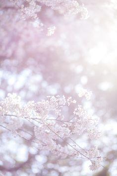 Frühling Wallpaper, Flower Background Wallpaper, Iphone Background Wallpaper, Scenery Wallpaper, Kawaii Wallpaper, Flower Backgrounds, Galaxy Wallpaper, Nature Wallpaper, Flower Aesthetic