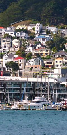 Houses at Oriental Bay ~ Wellington, New Zealand // The Invisible Tourist #livinginwellington #wellington #wellingtonnz #newzealand