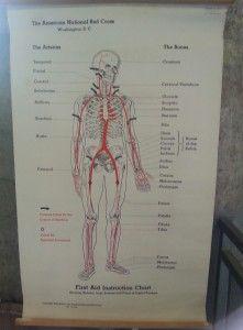 anatomy 101 Fleas, Anatomy, Artistic Anatomy