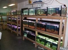 fish rack! - Aquarium Advice - Aquarium Forum Community..good ex of sturdy table for fry and breeding tanks.