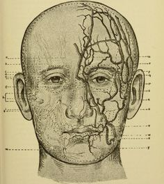 Nerves, arteries and veins of the face _Text-book of nervous diseases, being a compendium for the use of students and practitioners of medicine_ 1894