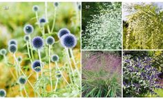 #ClippedOnIssuu from Piet Oudolf's 100 must-have plants