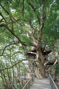「星野リゾート リゾナーレ熱海」の敷地内にある「森の空中基地 くすくす」は、樹齢300年の楠で作られた日本最大級のツリーハウスがシンボル。熱海の豊かな自然の中で、子供の頃の気持ちにに戻ってワクワクが体験できる場所です。