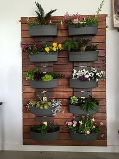 Vertical gardens at Four Seasons Nursery. The householder can now have a vertical garden and get that lush green wall. Lowest cost vertical garden in Australia.