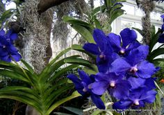 New York Botanical Garden - deep azure blue....simply dazzling...