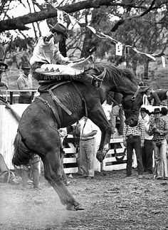 Saddle Bronc Riding - Australian National Rodeo Championship - Cootamundra - 1964