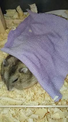 Aleep hamster