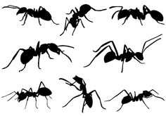 Ant Silhouette vector Download Ant VectorsSilhouette Clip Art
