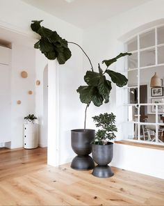Inspirational ideas about Interior Interior Design and Home Decorating Style for Living Room Bedroom Kitchen and the entire home. Curated selection of home decor products. Bungalow, Home Interior, Interior Design, Photos Originales, Huge Windows, Ikea Furniture, Furniture Ideas, Take A Breath, Living Spaces