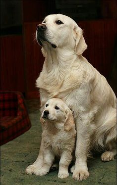 Momma dog and puppy