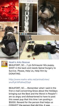 12/18/16 UPDATE ON SHOT DOG! /ij🐾🐾  https://m.facebook.com/story.php?story_fbid=1317734321581798&substory_index=0&id=139678782720697&__tn__=%2As
