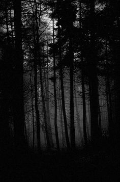 Dark forest, glow of the lake, an eternal dance of death Eerie Photography, White Photography, Ocean Photography, Photography Tips, Wedding Photography, Creepy Photos, Black Tree, Sombre, Dark Gothic