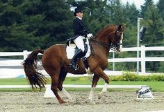 Also on the wishlist...the beautiful Hanoverian.