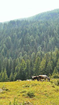 "#Paesaggi #PNGP Parco Nazionale Gran Paradiso #Canavese Foto by Giulio Tolli From ""#YesTorinoTips"" story by Yes! Torino on Storify — http://storify.com/yestorino/yestorinotips"