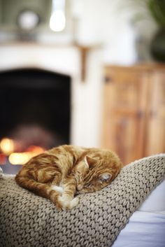 Happiness is a warm cat.