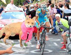 ジロ・デ・イタリア第19ステージ。必死の形相でステージ勝利を目指すクロイツィゲルよりも、手前の犬像が気になるw