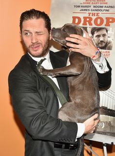 Tom Hardy ze swoim partnerem z planu filmu Drop. 10 Pictures Of Tom Hardy Playing With A Dog At The Premiere Of 'The Drop'