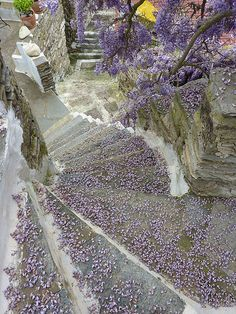 ktikados, tinos, stairs covered with flowers Stairs Covering, Staircases, Grand Canyon, Greece, Home And Garden, Nature, Flowers, Travel, Greece Country