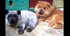 Você já viu cães como estes? - Fotos - Tabloide