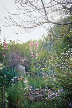 In an unforgiving countryside, the writer and horticulturist Umberto Pasti has created Rohuna, his garden, which is nothing less than autobiography writ from earth and flora.