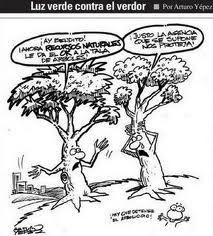 Arboles #oxigeno #vida