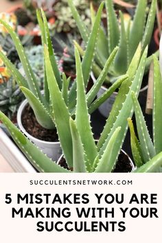 All you need to know about Aloe plant care, watering, and propagation is in this FREE guide! #aloe #succulent #type #info How To Water Succulents, Succulent Soil, Aloe Plant Care, Large Containers, Sandy Soil, Replant, Types Of Soil, Propagation, Outdoor Plants
