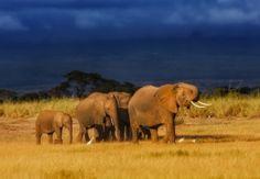 Kenia-Reisen mit Kindern