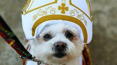 Cães vão para o céu? Declaração do papa abre discussão - Mundo - Notícia - VEJA.com