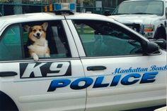 Snuggle enforcement officer