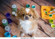 Puppy painter .