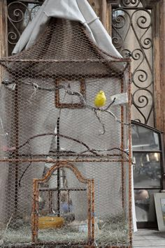 Yes, please.  With half a dozen finches.