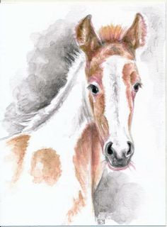 Little Ginger white foal by Evey Studios