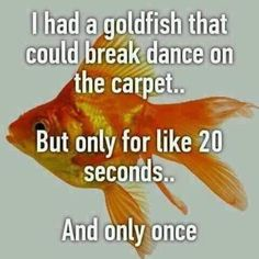 Only once?! #goldfish #fish #breakdance #onthefloor #20seconds #funny #funnymemes