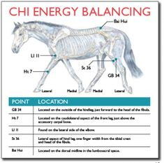What more can you do to keep your horse healthy, naturally? Try Traditional Chinese Medicine (TCM). TCM looks at the nature of the horse in relation to its environment. Though horses have a natural… Equine Massage Therapy, Horse Therapy, Therapy Dogs, Horse Riding Tips, Horse Tips, Chakras, Animal Reiki, Chi Energy, Shiatsu
