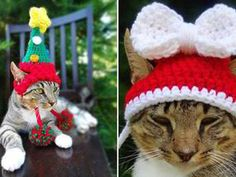 THIS keen knitter has come up with the PURR-FECT Christmas present – festive headwear for cats.