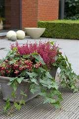 Jardiniere Fleurs Automne Hiver Gardening Pinterest Garden