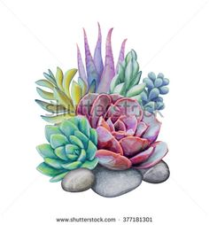 Watercolor Succulent Plants Floral Isolated No 373306195 stock illustrations, images and vectors - watercolor succulents, decorative illustration, floral clip art isolated on white background - Cactus Painting, Cactus Art, Painting & Drawing, Watercolor Succulents, Watercolor Flowers, Watercolor Paintings, Succulents Painting, Floral Illustrations, Botanical Illustration