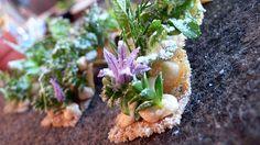 NOMA: Cod cream with herbs