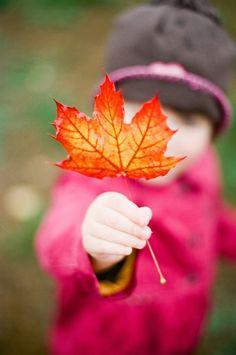 October leaves - ©Lindsey Ocker Photography - http://lindseyocker.com/2012/11/our-october/
