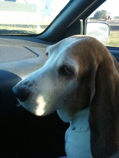 Sara, RIP. Miss my baby, but I know she's in doggie heaven. <3