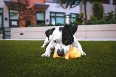 Ultimate Tips For Creating A Dog-Friendly Backyard