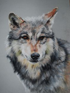 'The Wolf' by Tanya Patey. This was painted using pastel pencils on velour paper, its 30x40 inchs. I went to the open day at UK wolf conservation trust at Beenham in Reading. I was so inspired to paint these wonderful animal, I started painting as soon as I returned home. working from a number of sketches and photos I took on the day.