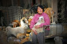 Ms. Yang - BUYS dogs to safe them from dog meat trade Shelters and feeds 1500 dogs and cats   read more-WGAPC