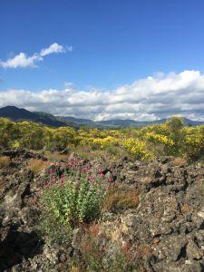 La viticoltura etnea e il versante orientale della Sicilia