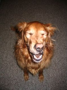 Cebo perro cachorro de tiburón//Bandana-Hecho a Mano en Reino Unido