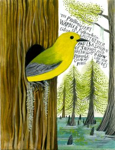 Warblers - the Tiny Aviary