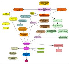 nice septic shock diagram - http://pinterest.com/laycal/neurology/